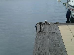 Våra två monster som bor på bryggan...