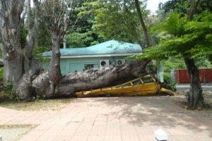 En buss som blev krossad under orkanen 1979