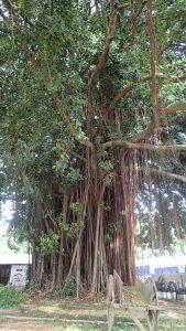Fantastiska träd mitt i allt ihop!