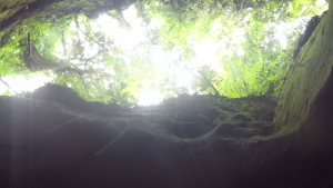 Titta upp och djungeln är taket mellan klipporna