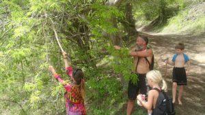 Plundring av ett överfullt tamarinträd. Lola gjorde god juice på frukterna :-)