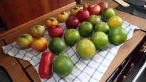 Frukt och grönt på tvätt inför San Blas